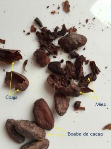 Boabe de cacao crude